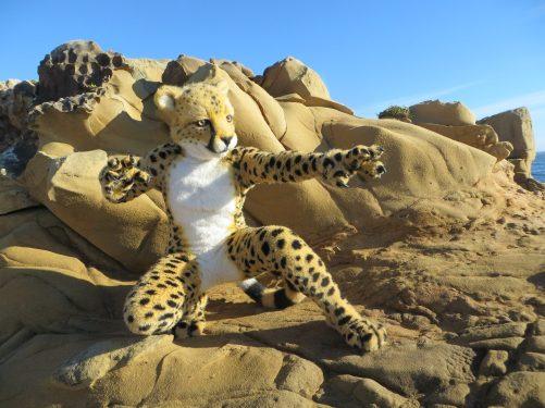 Cheetah1