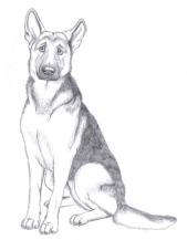 Shepherd Pencil